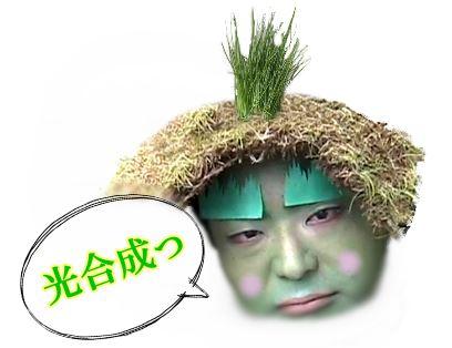kougousei01